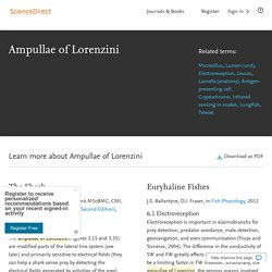 Ampullae of Lorenzini - an overview