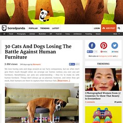 30 Cats And Dogs Losing The Battle Against Human Furniture