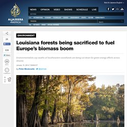 Louisiana forests being sacrificed to fuel Europe's biomass boom