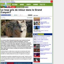Le loup gris de retour dans le Grand Canyon?