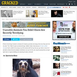 CRACKED: 5 Lovable Animals You Didn't Know Are Secretly Terrifying