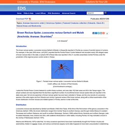 UNIVERSITY OF FLORIDA - 2015 - Brown Recluse Spider, Loxosceles reclusa Gertsch and Mulaik (Arachnida: Araneae: Sicariidae)
