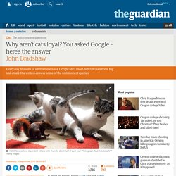 Why aren't cats loyal? You asked Google – here's the answer