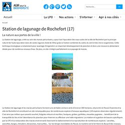 Station de lagunage de Rochefort (17)
