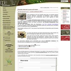 Lucane Cerf-Volant - Lucanus Cervus - Enquête Nationale