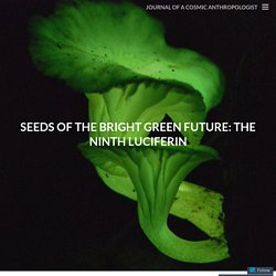 seeds of the bright green future: the ninth luciferin