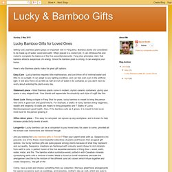 Lucky & Bamboo Gifts: Lucky Bamboo Gifts for Loved Ones