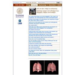 Andning: lungor och luftvägar hos däggdjur, fåglar och kräldjur - Info om djur