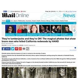 Magical photos show lumberjacks among the California redwoods