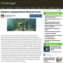 Submarine Lumberjacks Harvest Underwater Forests