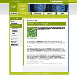 Direction des sciences du vivant : Lumière sur la photosynthèse