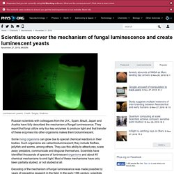 Scientists uncover the mechanism of fungal luminescence and create luminescent yeasts