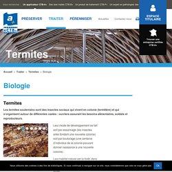 Lutter contre les attaques du bois des termites