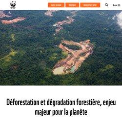 Forêt : lutter contre la déforestation