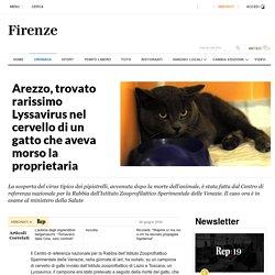 Arezzo, trovato rarissimo Lyssavirus nel cervello di un gatto che aveva morso la proprietaria - la Repubblica