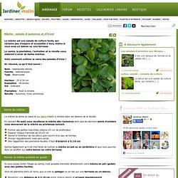 Mâche : culture, semis et récolte
