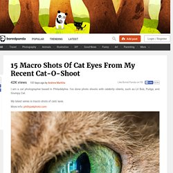 15 Macro Shots Of Cat Eyes From My Recent Cat-O-Shoot