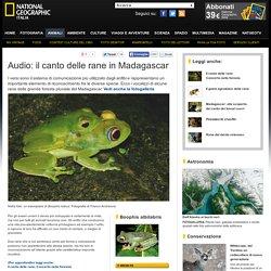 Audio: il canto delle rane in Madagascar