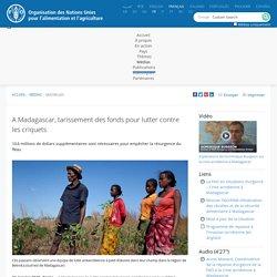 FAO 21/01/15 A Madagascar, tarissement des fonds pour lutter contre les criquets