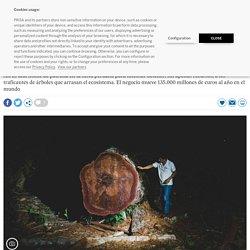 A la caza de los madereros ilegales que campan a sus anchas por el Amazonas