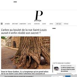 Magazine Prestige - L'arbre au boulet de la rue Saint-Louis aurait-il enfin révélé son secret?
