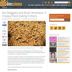 Ear Maggots and Brain Amoeba: 5 Creepy Flesh-Eating Critters