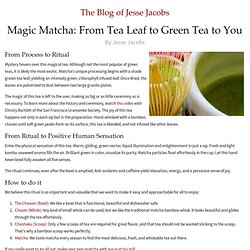 Magic Matcha: From Tea Leaf to Green Tea to You | Samovarlife