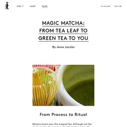 Magic Matcha: From Tea Leaf to Green Tea to You
