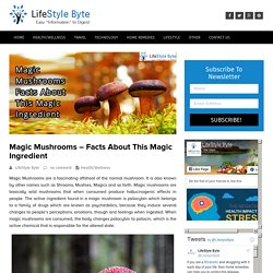 Magic Mushrooms - Facts About This Magic Ingredient