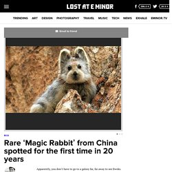 Rare 'Magic Rabbit' from China spotted for the first time in 20 years