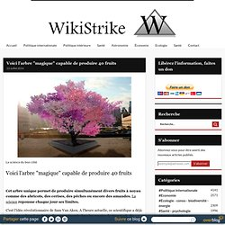 "Voici l'arbre ""magique"" capable de produire 40 fruits - Wikistrike"