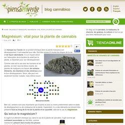 Magnesio: vital para la planta de marihuanaPiensa en verde