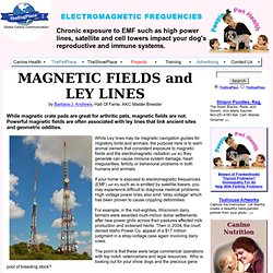 MAGNETIC FIELDS (EMF)& LEY LINES IMPACT REPRODUCTIVE AND IMMUNE SYSTEMS