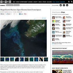 Magnificent Marine Algae Blooms Seen From Space | Wired Science