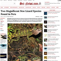 Two Magnificent New Lizard Species Found in Peru