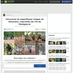 Découvrez de magnifiques images de lémuriens, mascottes de l'île de Madagascar