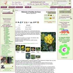 Mahonie à feuilles de houx, Mahonia aquifolium