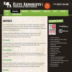 Tree Removal Services, Sittingbourne - Elite Arborists