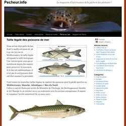 Maille des poissons de mer