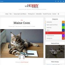 Maine Coon - My Hobby Portal