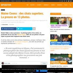 Maine Coons : des chats superbes. La preuve en 13 photos.