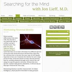 Maintaining Neuronal Identity