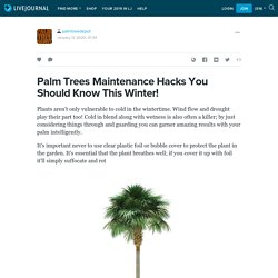 Palm Trees Maintenance Hacks You Should Know This Winter!