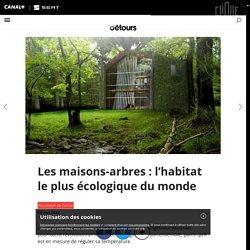 Les maisons-arbres : l'habitat le plus écologique du monde