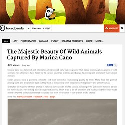 The Majestic Beauty Of Wild Animals Captured By Marina Cano