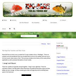 The Major Koi Varieties and Their Traits