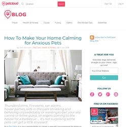 How To Make Your Home Calming for Anxious Pets