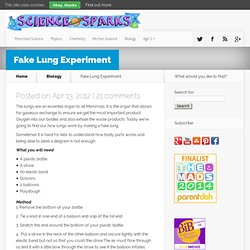 Make a fake lung - find out how lungs work