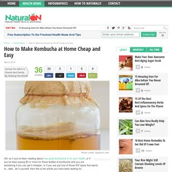How to Make Kombucha at Home Cheap and Easy - NaturalON