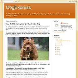 How To Make Life Easier On Your Senior Dog